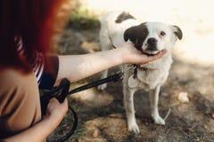 Mano perro asustado de la caricia del hombre del pequeño del refugio que presenta afuera Imagenes de archivo
