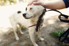 Mano perro asustado de la caricia del hombre del pequeño del refugio que presenta afuera Imagen de archivo libre de regalías