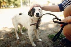 Mano perro asustado de la caricia del hombre del pequeño del refugio que presenta afuera Fotos de archivo libres de regalías