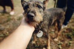 Mano perro mullido negro lindo de la caricia del hombre del pequeño del refugio adentro Imagen de archivo