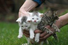Mano por completo de gatos Fotografía de archivo