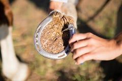 Mano potata del cerchio d'esame del cavallo del veterinario femminile Fotografie Stock