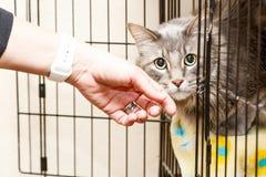 Mano que acaricia el gato asustado en jaula Fotos de archivo libres de regalías