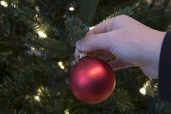 Mano que adorna el árbol de navidad Imagen de archivo libre de regalías