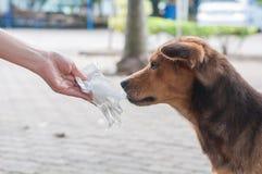 Mano que deja el perro pobre Imagen de archivo libre de regalías