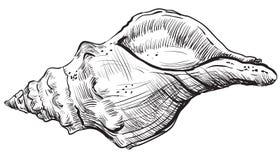 Mano que dibuja seashell-10 stock de ilustración