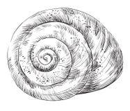 Mano que dibuja seashell-16 ilustración del vector