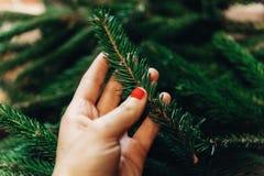 Mano que lleva a cabo la rama verde del abeto con las agujas Adornamiento de la Navidad Fotos de archivo