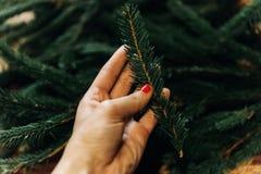 Mano que lleva a cabo la rama verde del abeto con las agujas Adornamiento de la Navidad Imagen de archivo