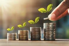 mano que lleva a cabo monedas para apilar y paso de la planta del crecimiento finanzas de ahorro del dinero del concepto fotos de archivo libres de regalías