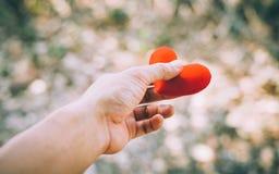 Mano que lleva a cabo un corazón rojo Foto de archivo