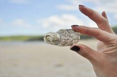 Mano que lleva a cabo un shell del mar Foto de archivo libre de regalías