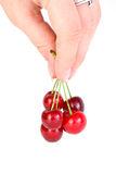 Mano que lleva pocas cerezas rojas Imagen de archivo libre de regalías
