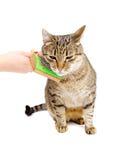 Mano que peina el peine adulto del gato Fotos de archivo