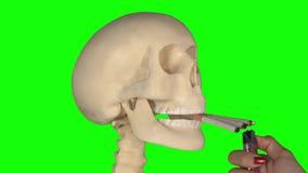 Mano que quema el cigarrillo tres en el cráneo humano almacen de video