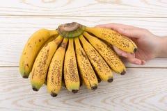 Mano que sostiene el manojo de plátanos pecosos amarillos Fotos de archivo