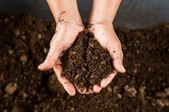 Mano que sostiene el musgo de turba del suelo Foto de archivo libre de regalías