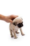 Mano que sostiene el pequeño perrito imagen de archivo