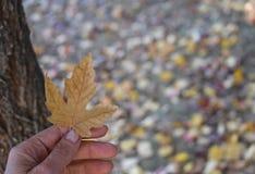 Mano que sostiene la hoja del otoño Foto de archivo libre de regalías