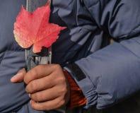 Mano que sostiene la hoja roja en otoño fotos de archivo
