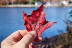 Mano que sostiene la hoja roja por el lago azul fotografía de archivo libre de regalías