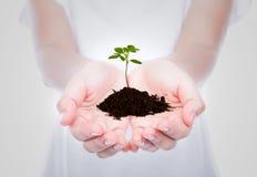 Mano que sostiene la pequeña planta verde Fotografía de archivo libre de regalías