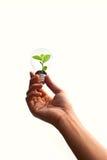 Mano que sostiene la planta verde en bombilla Imagenes de archivo