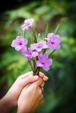 Mano que sostiene las flores Fotos de archivo
