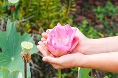 Mano que sostiene las flores Fotografía de archivo libre de regalías