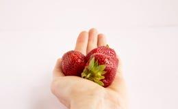 Mano que sostiene las fresas tres pedazos Foto de archivo