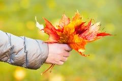 Mano que sostiene las hojas de arce anaranjadas en fondo del otoño Foto de archivo libre de regalías