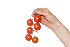 Mano que sostiene los pequeños tomates Fotografía de archivo libre de regalías