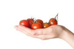 Mano que sostiene los pequeños tomates Imagenes de archivo
