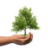 Mano que sostiene un árbol grande Imagen de archivo