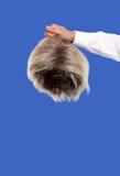Mano que sostiene una peluca Imagen de archivo