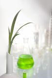 Mano que sostiene una planta Imagen de archivo libre de regalías