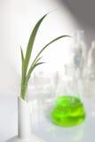 Mano que sostiene una planta Fotos de archivo