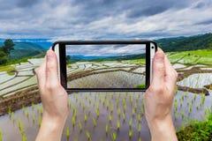 Mano que toma la imagen con el móvil en el campo colgante verde del arroz Fotos de archivo libres de regalías