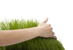 Mano sopra erba verde Immagine Stock Libera da Diritti