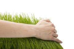Mano sopra erba verde Fotografie Stock