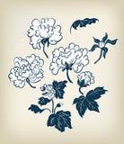 Mano tradicional japonesa del estilo de la tinta de los elementos del diseño de la peonía del ejemplo del vector dibujada ilustración del vector