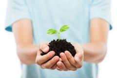 Mano umana che tiene crescita verde della foglia del germoglio al suolo della sporcizia immagine stock libera da diritti