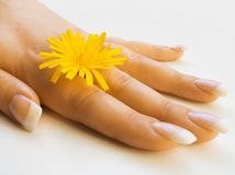 Mano y flor Foto de archivo libre de regalías