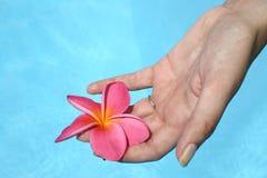 Mano y flor Imagen de archivo libre de regalías