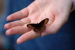 Mano y mariposa Imagen de archivo