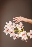 Mano y orquídea Foto de archivo libre de regalías