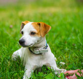 Mano y perro Fotos de archivo