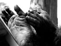 Mano y pie Imagen de archivo libre de regalías