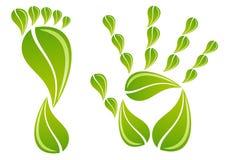 Mano y pie con las hojas, vector stock de ilustración