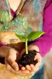 Mano y planta Concepto del ambiente Fondo hermoso de la ropa Imagenes de archivo